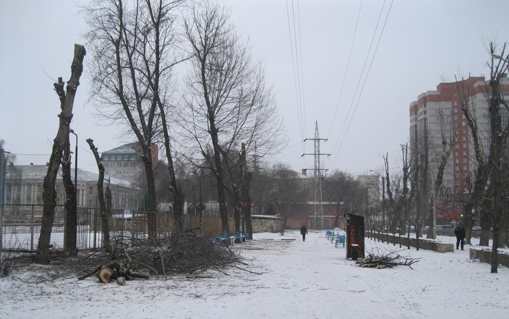 В Комсомольском сквере Воронежа начали спиливать 52 засохших ясеня