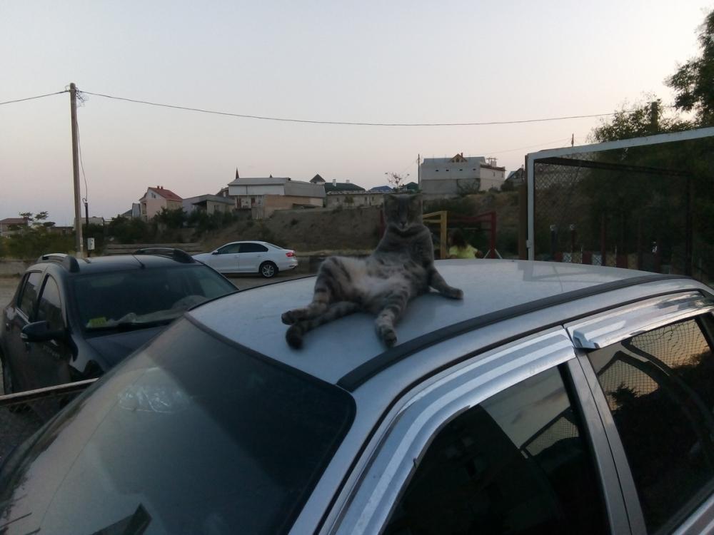 Вальяжного кота с вываленным хозяйством назвали четким воронежцем