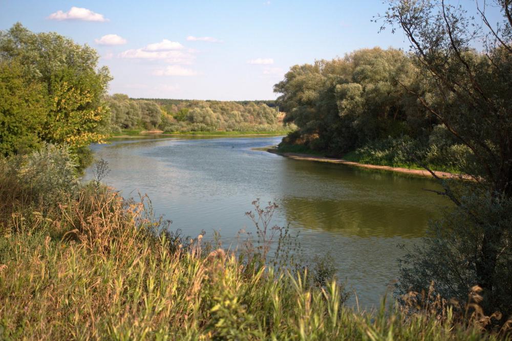 Русло реки Воронеж экологически реабилитируют за 16,8 млн рублей