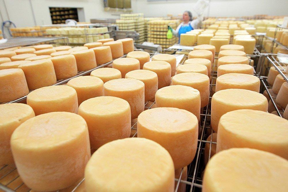 Под Воронежем завод производил сыр с антибиотиками