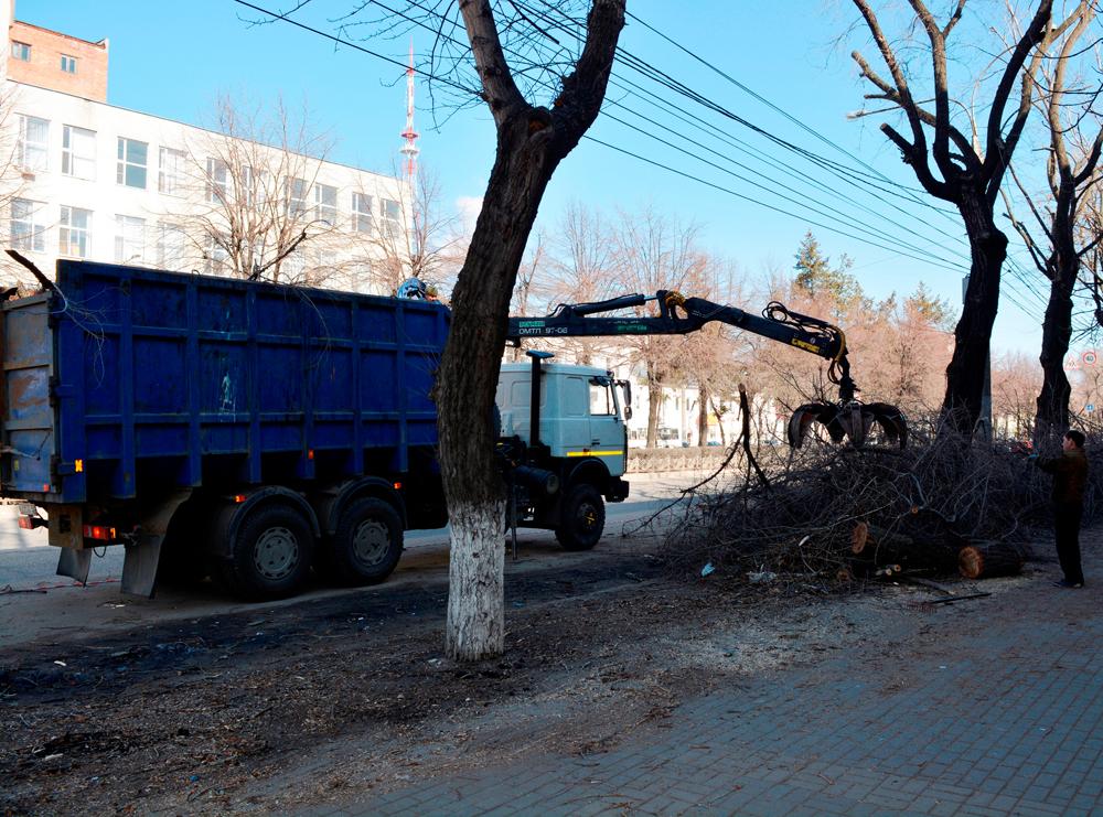 Власти рассказали, сколько за этот год уничтожили деревьев в центре Воронежа