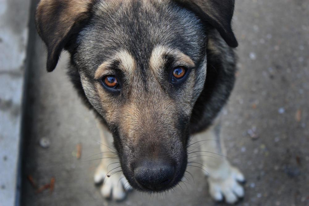 Мэрия попросила воронежцев сообщать о бездомных собаках