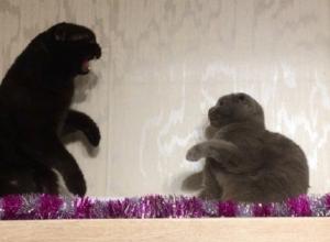 Эпичная битва британца с черным котом в Воронеже попала на видео