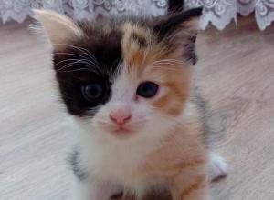 Кошку, обладающую даром исцеления, бесплатно отдают в Воронеже