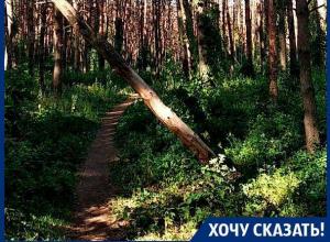 Наш лес травят, – жительница Северного микрорайона Воронежа