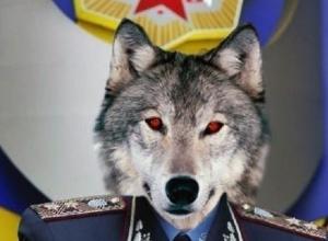 В полиции Воронежа обнаружен очередной высокопоставленный оборотень в погонах