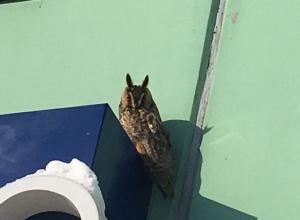 Воронежец днем заметил подозрительную сову из «Хогвартса»