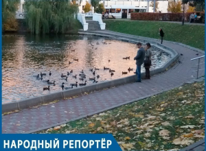 Невиданное нашествие уток: довольные пернатые обосновались на Лебедином озере в Воронеже