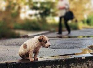 3 млн рублей власти Воронежа направят на борьбу с бездомными животными