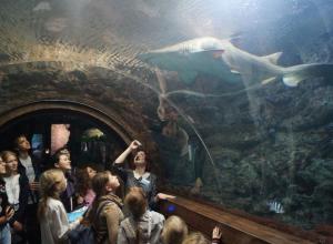 УГМК подарила новохоперским школьникам поездку в Воронежский океанариум