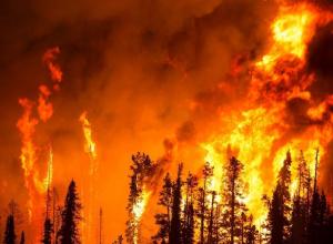 Максимальный класс пожароопасности объявило МЧС в Воронежской области