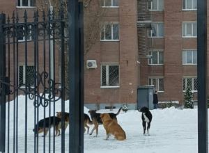 Воронежские студенты и преподаватели: «Огромные стаи бродячих псов нападают на нас каждый день около ВГУ»