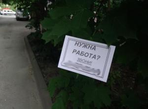 В Воронеже организаторы лохотрона используют для рекламы деревья
