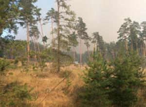 Воронежцы переживают, что чудовищный пожар на Левом берегу не смогут потушить, и история 2011 года повторится