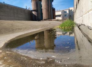 Уникальный оазис нашли воронежцы на крыше заброшенного завода