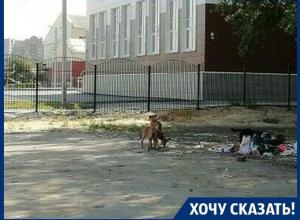 У школы нас поджидают бродячие псы, - мама воронежской первоклассницы