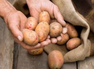 Воронежец отправится в колонию на 3,5 года из-за картошки