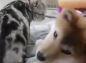 В Воронеже хозяйка подставила собаку под мощные лапы кота