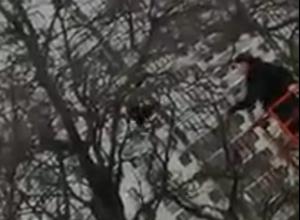 Операция по спасению грача в Воронеже попала на видео