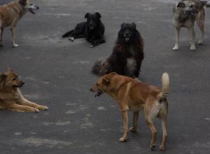 Свора из 25 собак держит в страхе общежитие в Воронеже