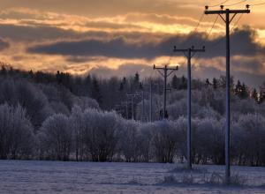 Под Воронежем восемь сел остались без света из-за лесорубов