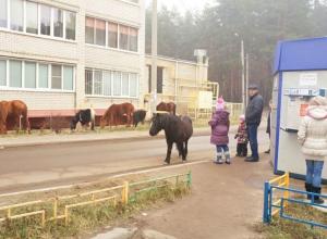 Табун лошадей сбежал от пьяного хозяина в Воронеже