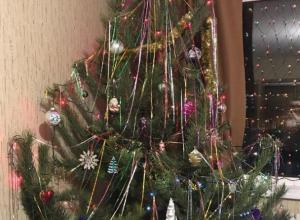Воронежцам предложили помериться елками
