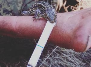 Курящую ящерицу нашли в воронежском лесу