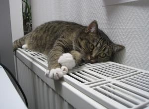Когда в Воронеже отключат отопление