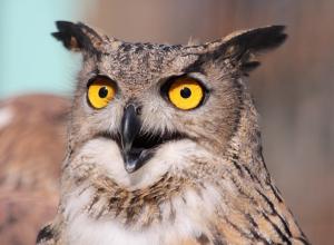 После массового истребления птиц в Воронежском зоосаде Липецкий зоопарк подарит нашему региону пернатых