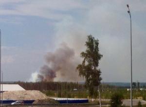 Воронежцы вновь ужаснулись черным клубам дыма в лесу у Отрожки