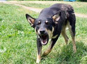 Дикие собаки напали на трех детей под Воронежем