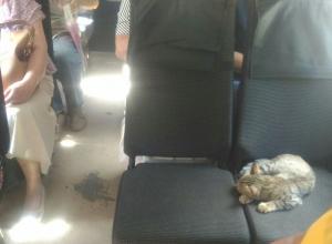 Самого приятного пассажира нашли в воронежской маршрутке