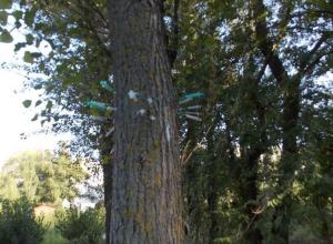 Дерево из шприцов на Левом берегу города шокировало воронежцев