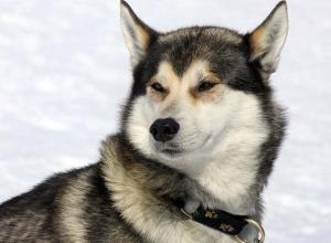 42 домашних животных заболело бешенством в Воронежской области