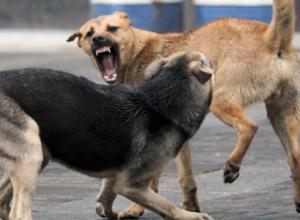 Воронежцам рассказали, каких собак будут усыплять за бюджетные средства