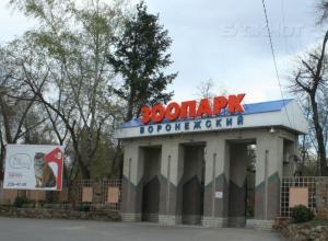 Студентов пригласили в Воронежский зоопарк на бесплатное селфи с питоном