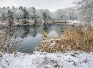 Под Воронежем в пруду утонул житель села Запрудное