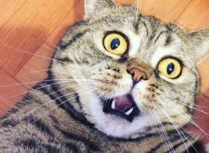 Шокирующее селфи кота из Воронежа опубликовали в Сети