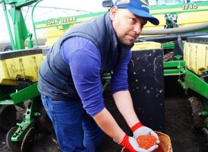 «Монсанто» увеличивает производство высокоурожайных гибридов кукурузы в России