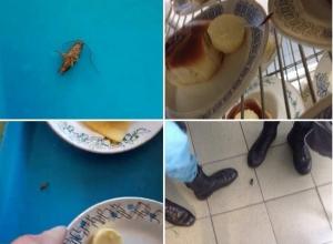Обед среди мышей и тараканов: в каких условиях приходится питаться курсантам Воронежского института МЧС