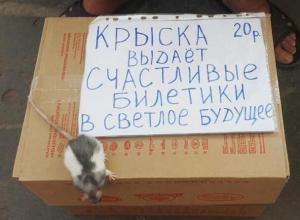 Крысиный стартап со светлым будущим заметили на улице в Воронеже