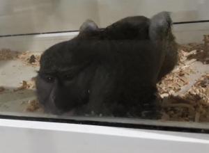 Условия жизни зверушек в передвижном зоопарке показали на видео в Воронеже