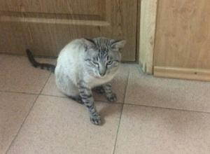 Наглый кот и антисанитария в масловской поликлинике шокировали воронежца