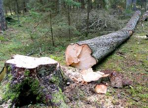 Воронежец заплатит 806 тысяч рублей за рубку деревьев для сарая