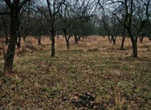 Суд вернул 24 га воронежского «Яблоневого сада» Российской Федерации