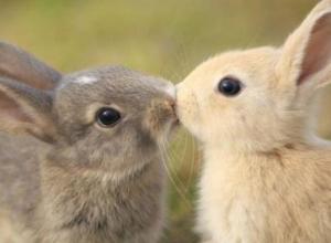 После убийства кроликов оголодавшему воронежцу светит путешествие в тюрьму
