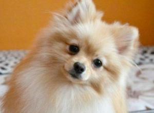 Названы самые популярные породы собак в Воронеже