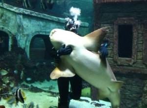 Воронежцев умилил танец водолаза с большой акулой