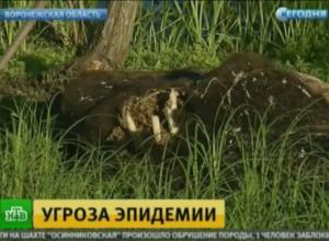 Канал НТВ показал сюжет про коровий Чернобыль в Воронежской области